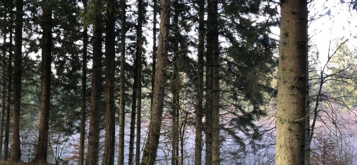 Opnå mindre stress ved at gå en tur i skoven, eller bare kom ud i naturen